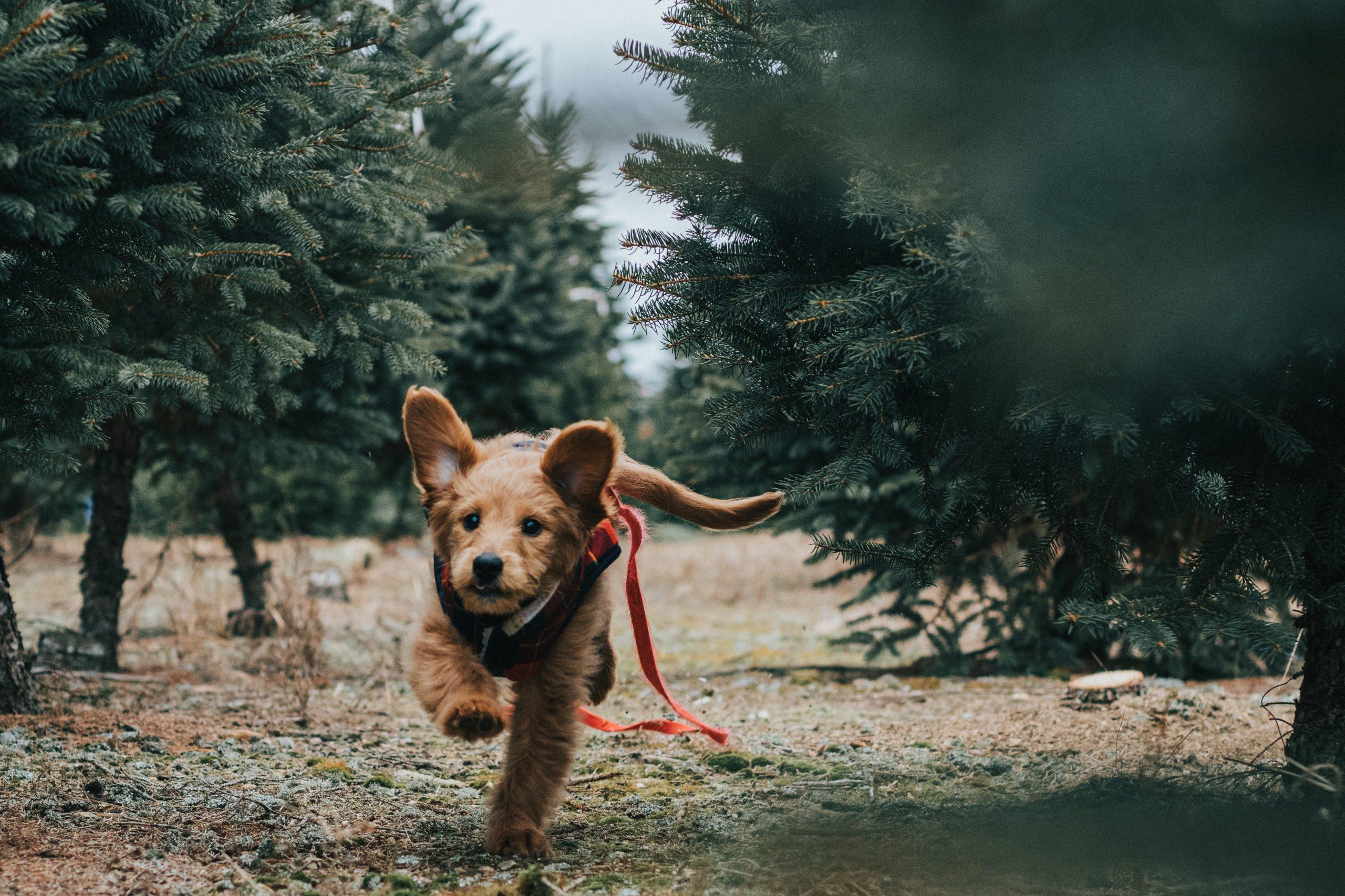 Chien et bébé: habituer votre chien au bébé
